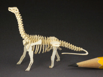 Brontosaurus skeleton model