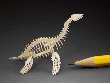 Plesiosaur skeleton model