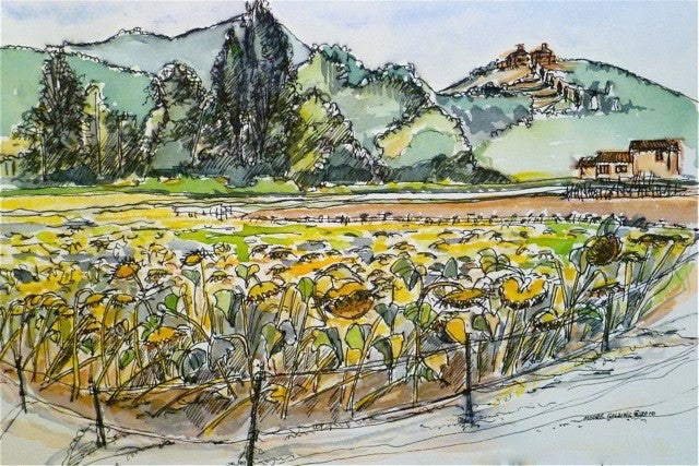 Sunflowers, Anghiari, Tuscany. 2010  Elizabeth Moore Golding Original Artwork