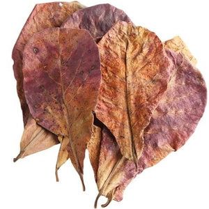 Indian Almond Leaves (20 Pack) - Free Shipping