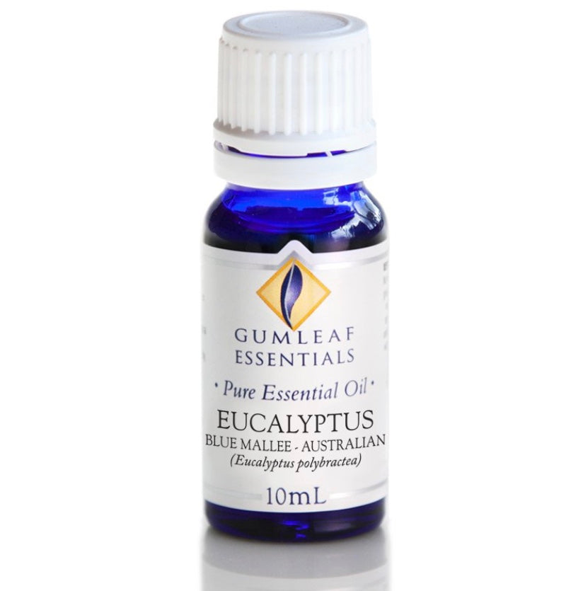 Pure Essential Oil - Eucalyptus