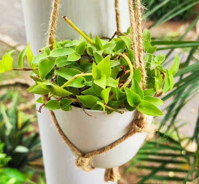 The Truth about Indoor Plants