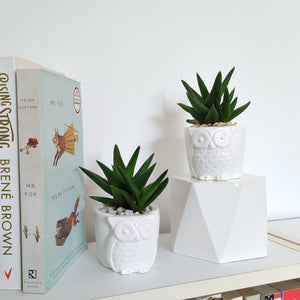 Aloe black gem in 'Owl;'