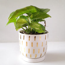 Load image into Gallery viewer, 'Golden rain' (ceramic) - PLANTER ONLY