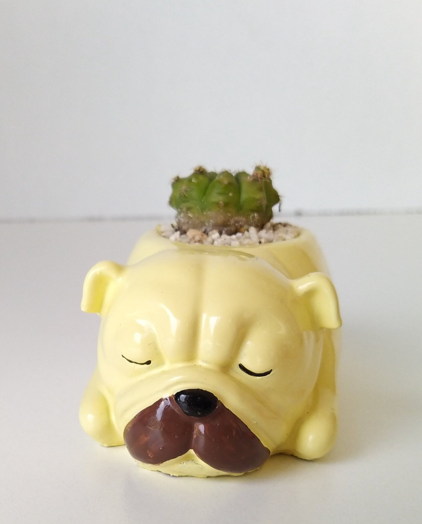 Puppy - PLANTER ONLY