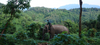 Luminary Su Young: Life at the Laos Elephant Sanctuary