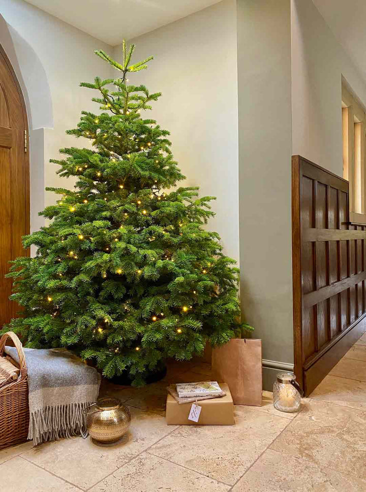 7FT Christmas Tree Starter Kit