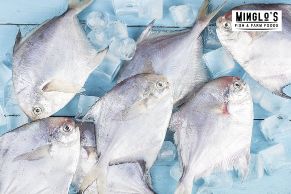 Silver Pomfret / (6 TO 7 COUNT/ 1KG) - MINGLO'S
