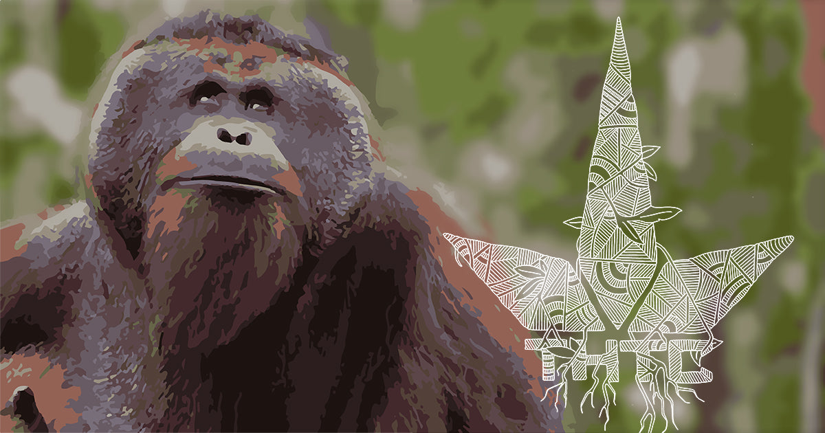 Jungle Love: THTC x Orangutan Foundation