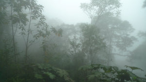 Never Give In: WLT's Andean Cloud Forest Victory