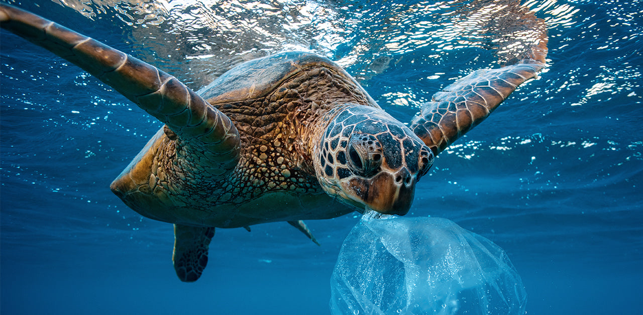 9 Ways to Reduce Plastic Consumption