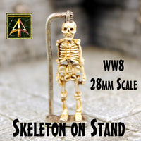 WW8 Skeleton on stand