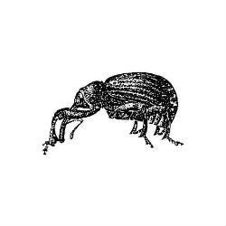 Weevil Neighbourhood