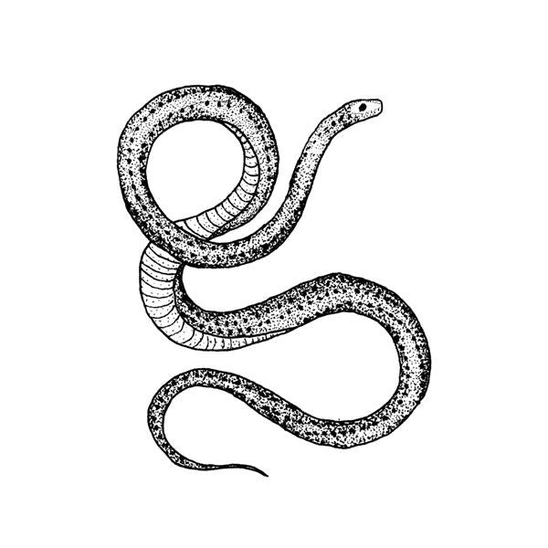 Tattly Temporary Tattoos - Serpent (set of 2)