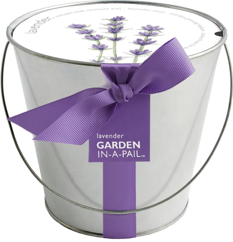 Lavender-in-a-Pail