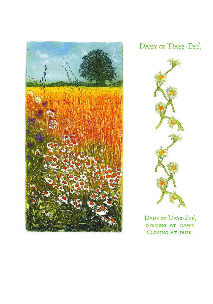 Birthday Card - Cornfield - L75B02
