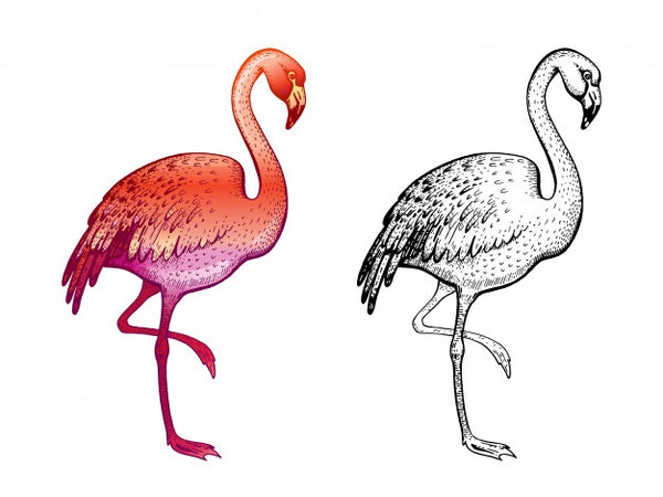 modele de coloriage flamant rose
