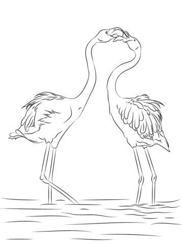 couple de flamant rose à colorier