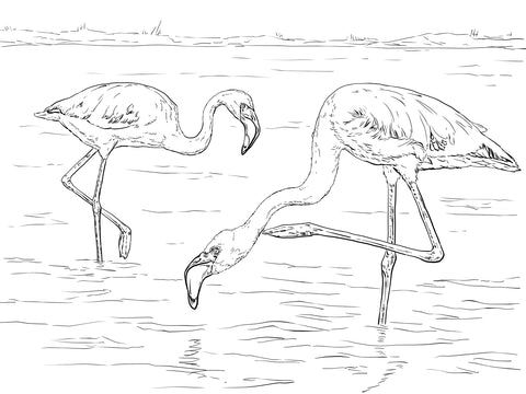 duo de flamants roses a colorier dans l'eau