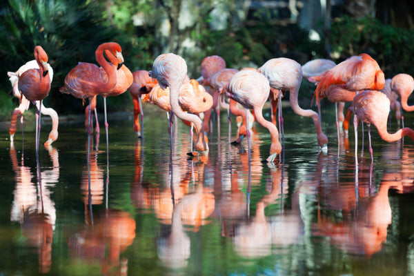 flamant rose ensemble
