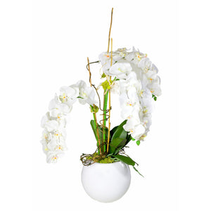White Orchids in White Pot