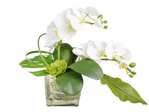 White Orchid with Greens in Glass Vase