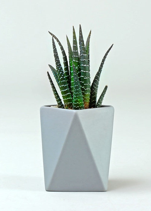 Tall Geometric Pot-Gifts-Sancho's Dress