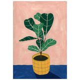 Mothers Fiddle Leaf Fig