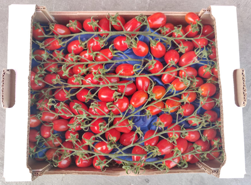Datterini tomatoes (300g packet)