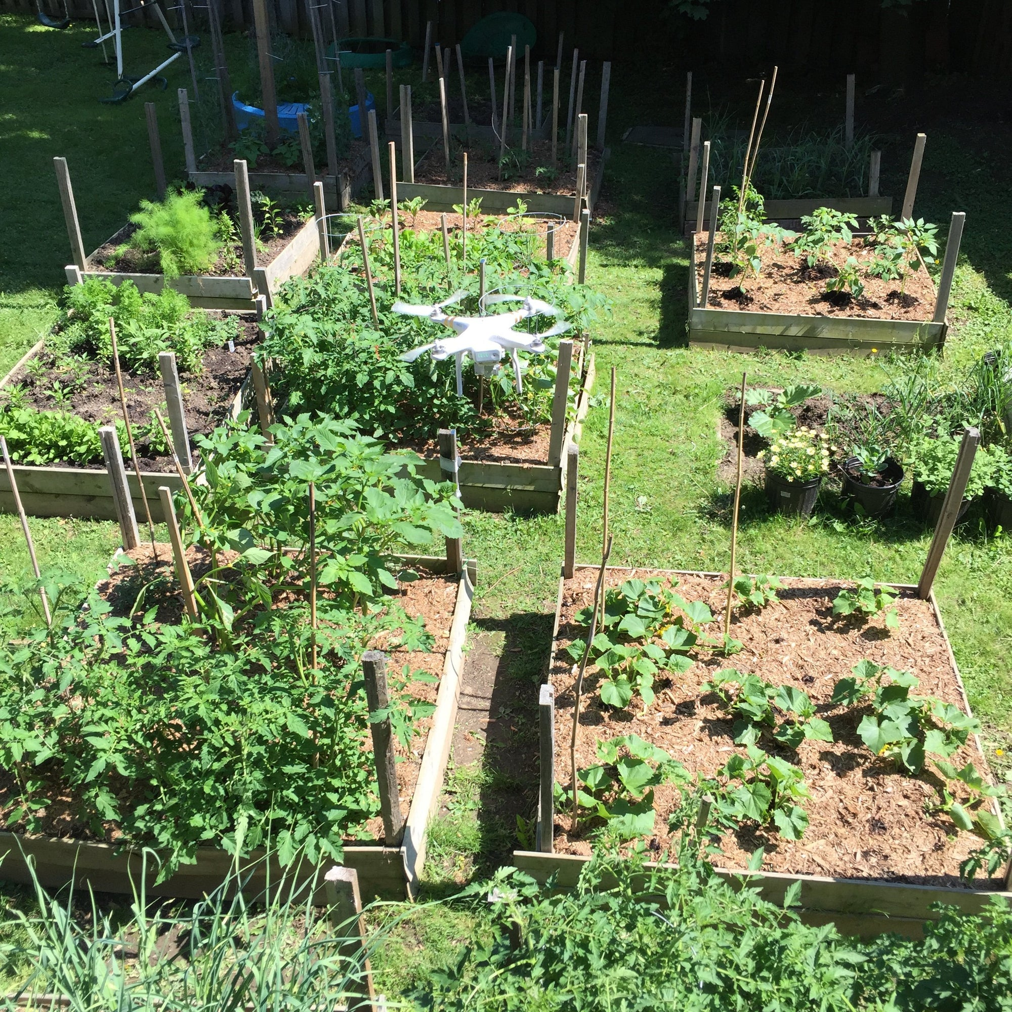 Is it time to rethink Gardening in your city? | Healthy Garden Co