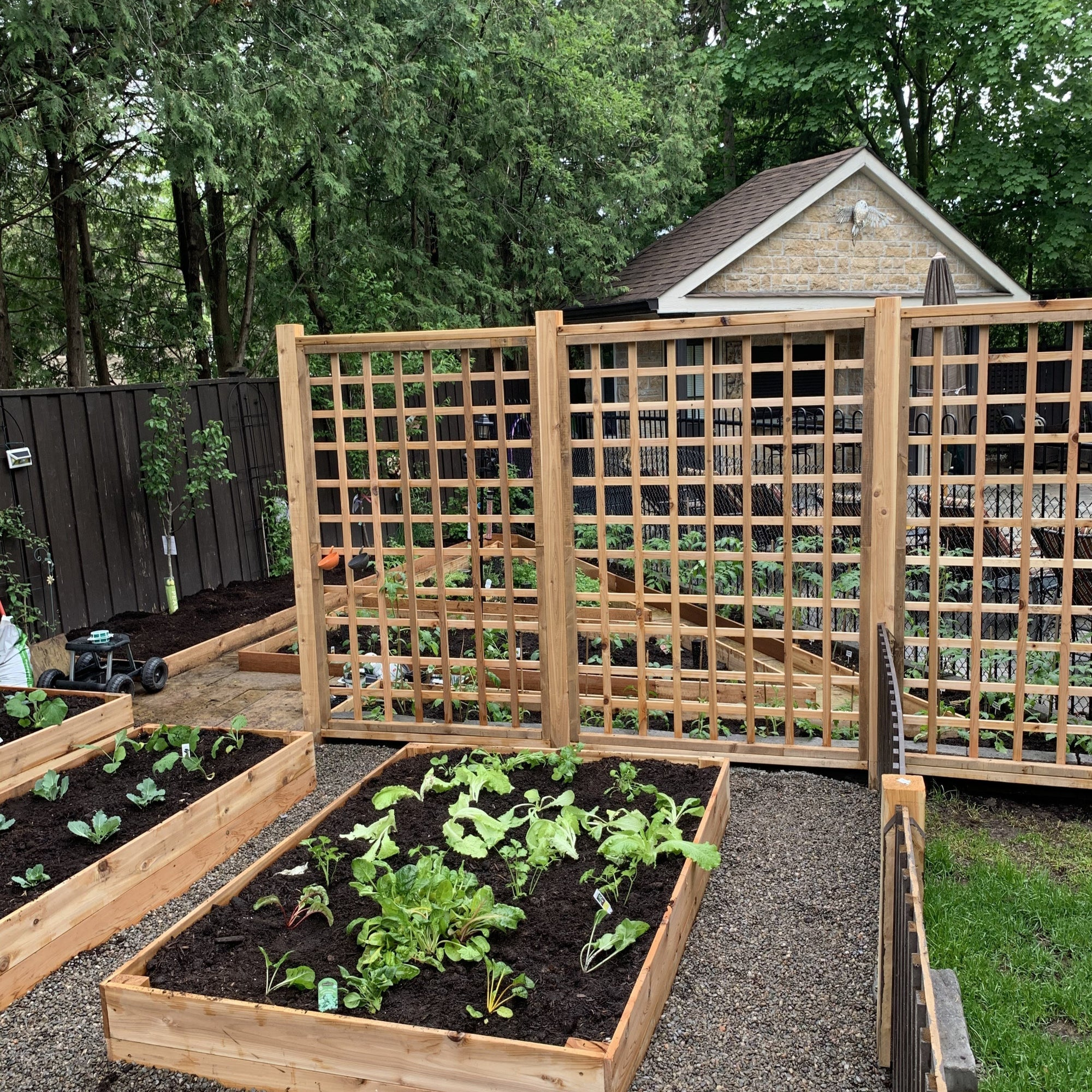 Custom Built Trellis - Healthy Garden Co