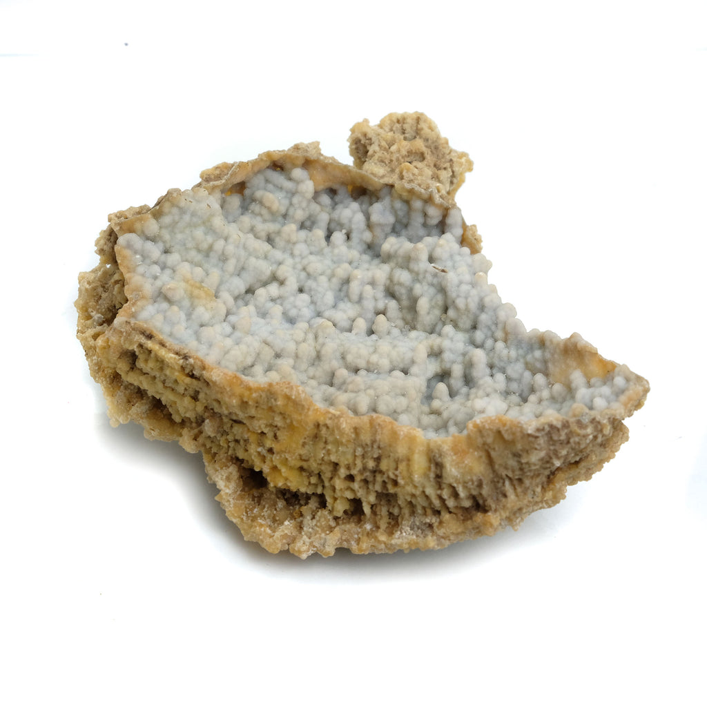 Fossilized Coral in Botryoidal Form with Silicate Druzy Specimen #100