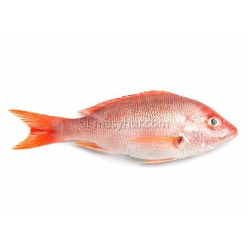 Fish - Red Snapper 1kg (Merah) (1 fish/kg*)