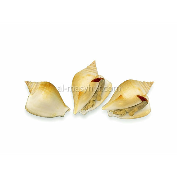 Seafood - Pearl Conch 1kg (Gong Gong)