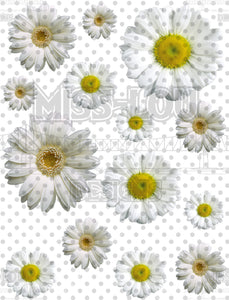 Daisy Sheet Digital Download