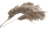 55cm Dried Pampas Grass - Natural Color (1 pc)