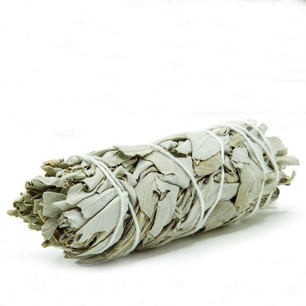Dried White Sage Leaf 18 cm (2 pcs)