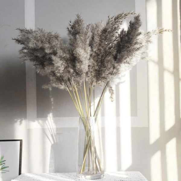 Gray/Natural Large Dried Pampas Grass (1 pc)