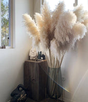 80cm Dried Pampas Grass - Cream/Off White (3 pcs)
