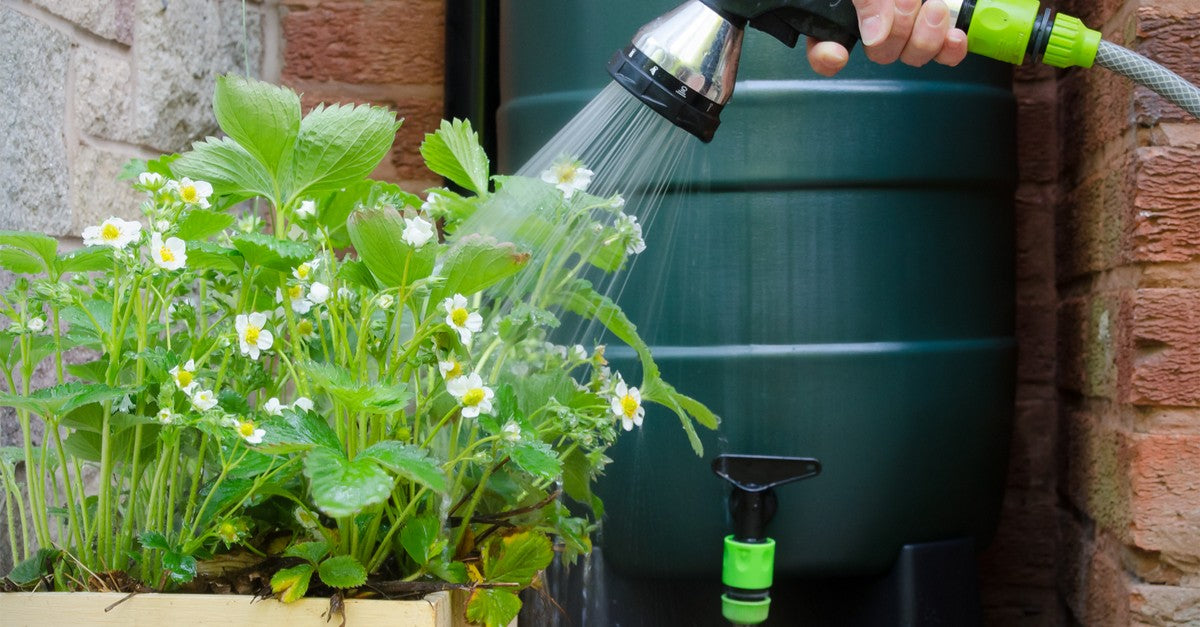 Harvesting rainwater solutions
