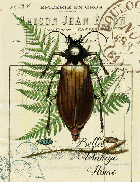 Botanical Beetle and Fern Print,  Pillow, Note Cards