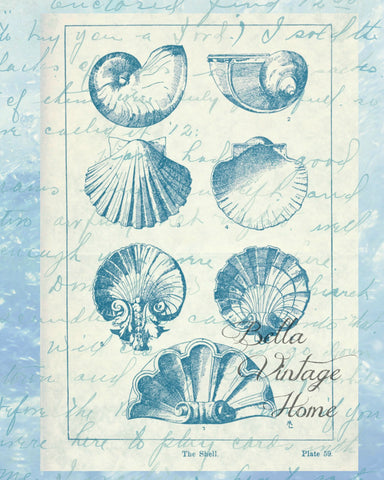 Blue Shells Print,  Pillow, Note Cards, Tea Towel, Digital Download - BELLAVINTAGEHOME