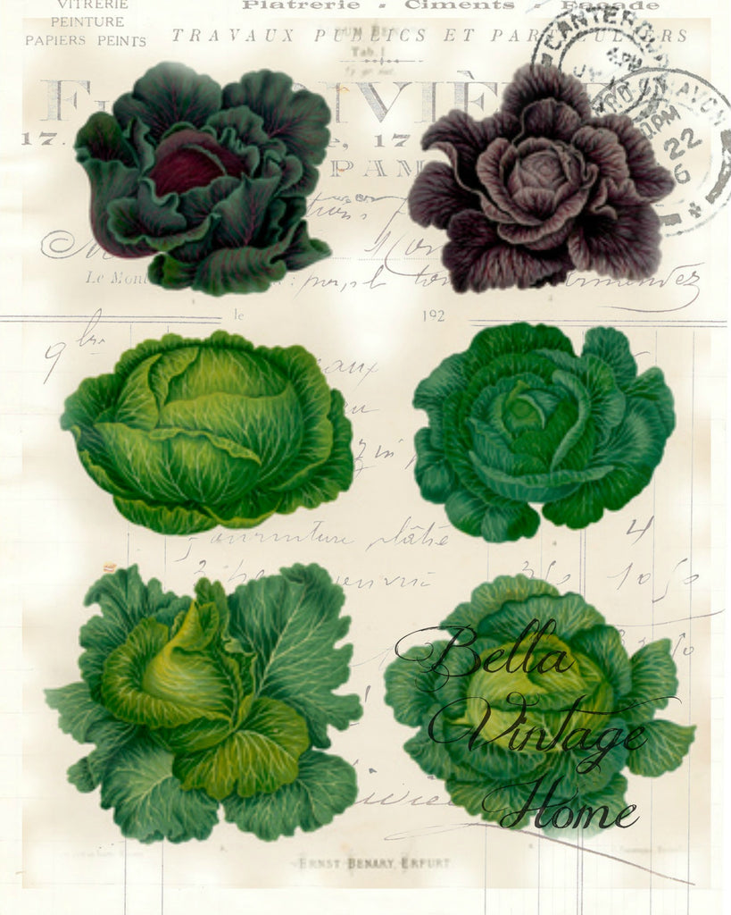 Botanical Cabbage Print Pillow Note Cards Bellavintagehome