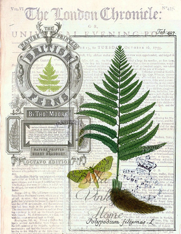 Botanical  Fern 2 Print, Pillow, Note Cards, Tea Towel