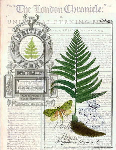 Botanical  Fern 2 Print, Pillow, Note Cards, Tea Towel, Digitial Download - BELLAVINTAGEHOME