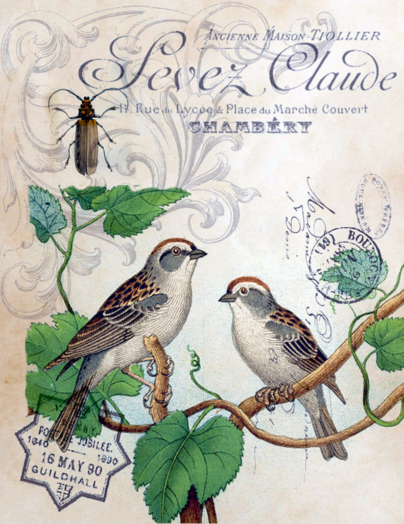 Botanical French Birds Print, Pillow, Note Cards, Tea Towel, Digital Download - BELLAVINTAGEHOME
