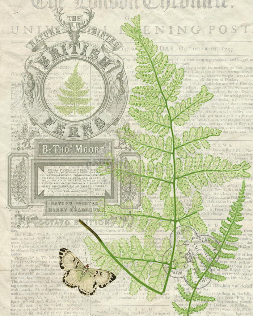British Fern Pine  Print,  Pillow, Note Cards, Tea Towel