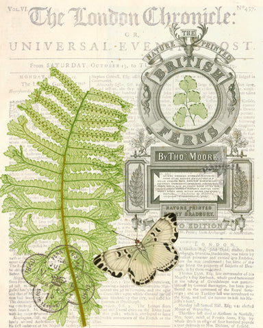 British Fern II  Print,  Pillow, Note Cards
