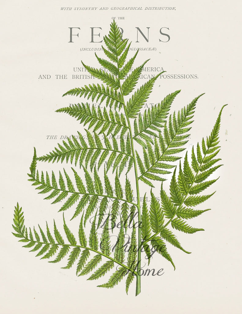 Botanical Fern I  Print,  Pillow, Note Cards, Tea Towel