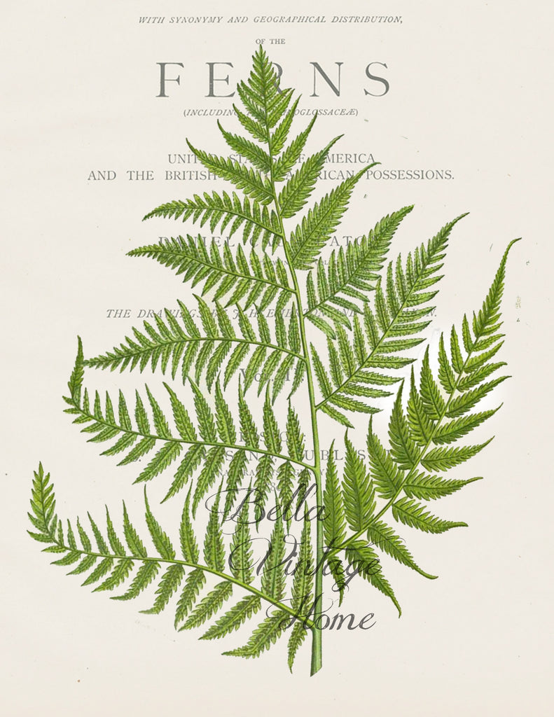Floral Tea  Towel   Botanical Fern I - BELLAVINTAGEHOME